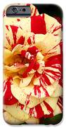 Red Yellow Rose IPhone Case by Christine Till