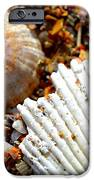 Shells On Sand IPhone 6s Case by Riad Belhimer