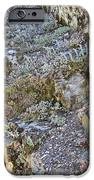 Siskiyou Sedums IPhone 6s Case by Dan A  Barker
