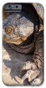 Snapping Turtle IPhone 6s Case by Thomas Pettengill