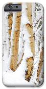 Snow Covered Birch Trees IPhone 6s Case by John Kelly