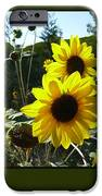 Song Of The Sunflower IPhone 6s Case