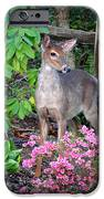 Spring Deer IPhone 6s Case by Crystal Joy Photography