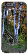Stairway To Fall IPhone 6s Case by Kathy DesJardins