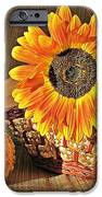 Stillife With  The Sunflower And Pumpkins IPhone 6s Case by Halyna  Yarova
