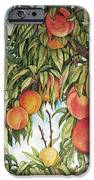 Summer Peaches IPhone 6s Case by Helen Klebesadel