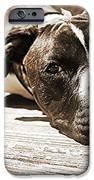 Sun Bathing IPhone 6s Case by Sarah E Kohara