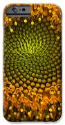 Sunflower An Bumble IPhone 6s Case
