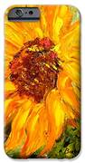 Sunflower IPhone 6s Case by Barbara Pirkle