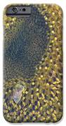 Sunflower Bees IPhone 6s Case by Elizabeth Stedman