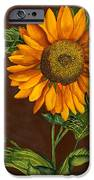 Sunflower IPhone 6s Case by Diane Ferron