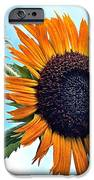 Sunflower In The Sky IPhone 6s Case by Annette Allman
