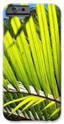Sunlit Palm Tree  IPhone 6s Case by Prashant Shah