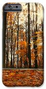Sunny Fall Day IPhone 6s Case by Candice Trimble