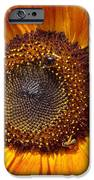Sunny Sunflower IPhone 6s Case by Annette Allman