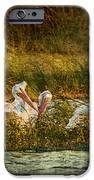 Pelicans Rest IPhone 6s Case by Pam Vick
