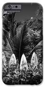 Surf Board Fence Maui Hawaii Black And White IPhone 6s Case by Edward Fielding