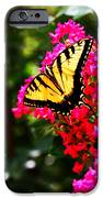 Swallowtail Beauty  IPhone 6s Case