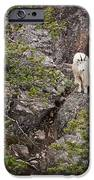 Switchback Goat 4 IPhone 6s Case by Roger Snyder