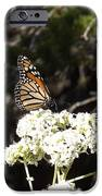The Big Monarch IPhone 6s Case