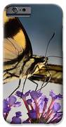 The Butterfly IPhone 6s Case