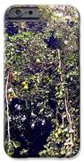 The Pear Tree IPhone 6s Case
