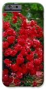 The Red Tree IPhone 6s Case by Robert Bray