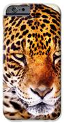 The Stare IPhone 6s Case