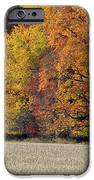 The Wonder Of Fall IPhone 6s Case