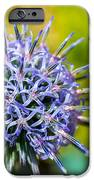 Thistle IPhone 6s Case by Andrew Lalchan