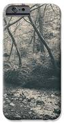 Through The Woods IPhone Case by Laurie Search
