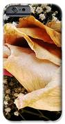 Tightly Wrapped Petals IPhone 6s Case by Tanya Jacobson-Smith