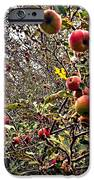 Time To Pick The Apples IPhone 6s Case