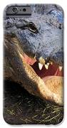 Toothy Grin IPhone Case by Adam Jewell