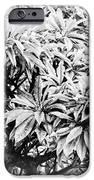 Tree Bush Vignette IPhone 6s Case by Lisa Cortez