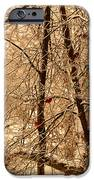Tree Of Life IPhone 6s Case