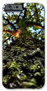 Tree Scales IPhone 6s Case by Christian Rooney