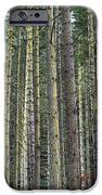 Trees Trees And More Trees IPhone 6s Case by Jeff Swanson