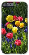 Tulips And Grape Hyacinths IPhone 6s Case