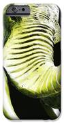 Tusk 1 - Dramatic Elephant Head Shot Art IPhone Case by Sharon Cummings
