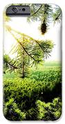 Under The Evergreen IPhone 6s Case by Christian Rooney