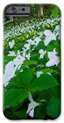 Vast Trillium IPhone 6s Case by Thomas Pettengill