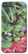 Violets IPhone 6s Case by Diane Mitchell