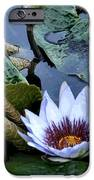 Water Lily IPhone 6s Case by Sharon McLain