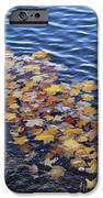 Wave Of Fall Leaves IPhone 6s Case