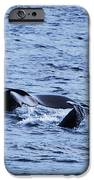 Whale 2 IPhone 6s Case by Lorena Mahoney
