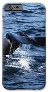 Whale  IPhone 6s Case by Lorena Mahoney