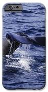 Whale Tail 2 IPhone 6s Case
