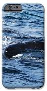 Whale Tail 3 IPhone 6s Case by Lorena Mahoney