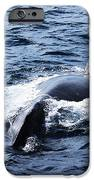 Whales Family IPhone 6s Case